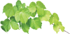 Leaf-The-Leaves-Green-Vine-Ivy-Damme-Wall-4687175
